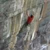 Climbing Video: Matt Wilder Sending The Path (5.14 R)