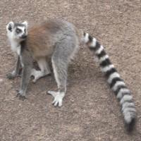 Adam Ondra Visits Madagascar
